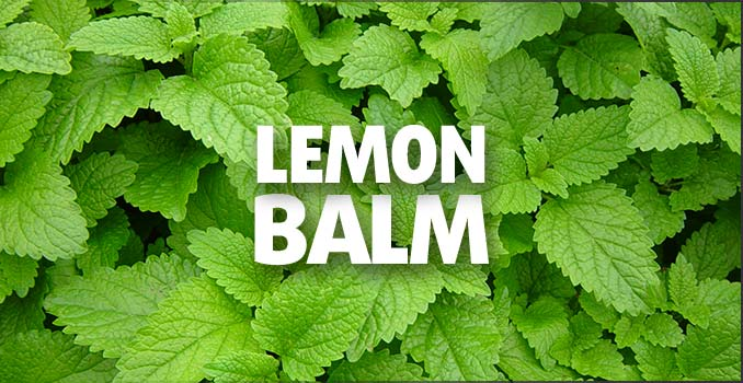 Discovering the Health Benefits of Lemon Balm